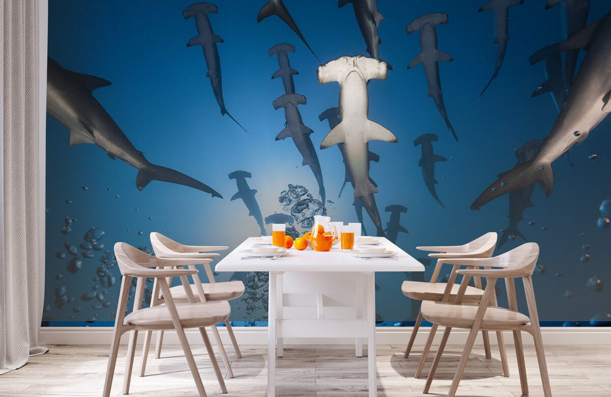 Underwater Hammerhead Shark 2