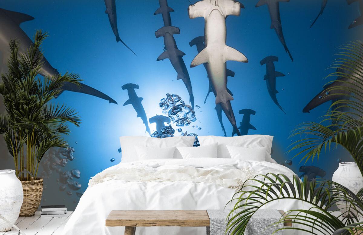 Underwater Hammerhead Shark 6