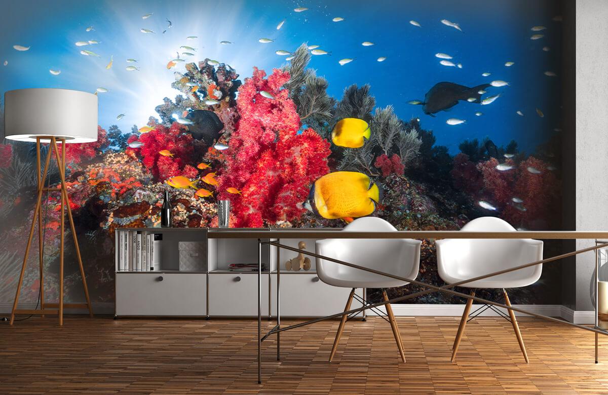Underwater Reef life 2