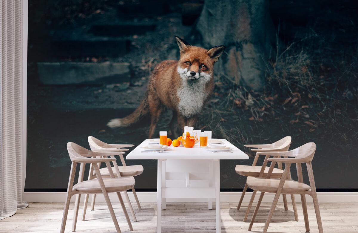 Wallpaper Un renard curieux 4