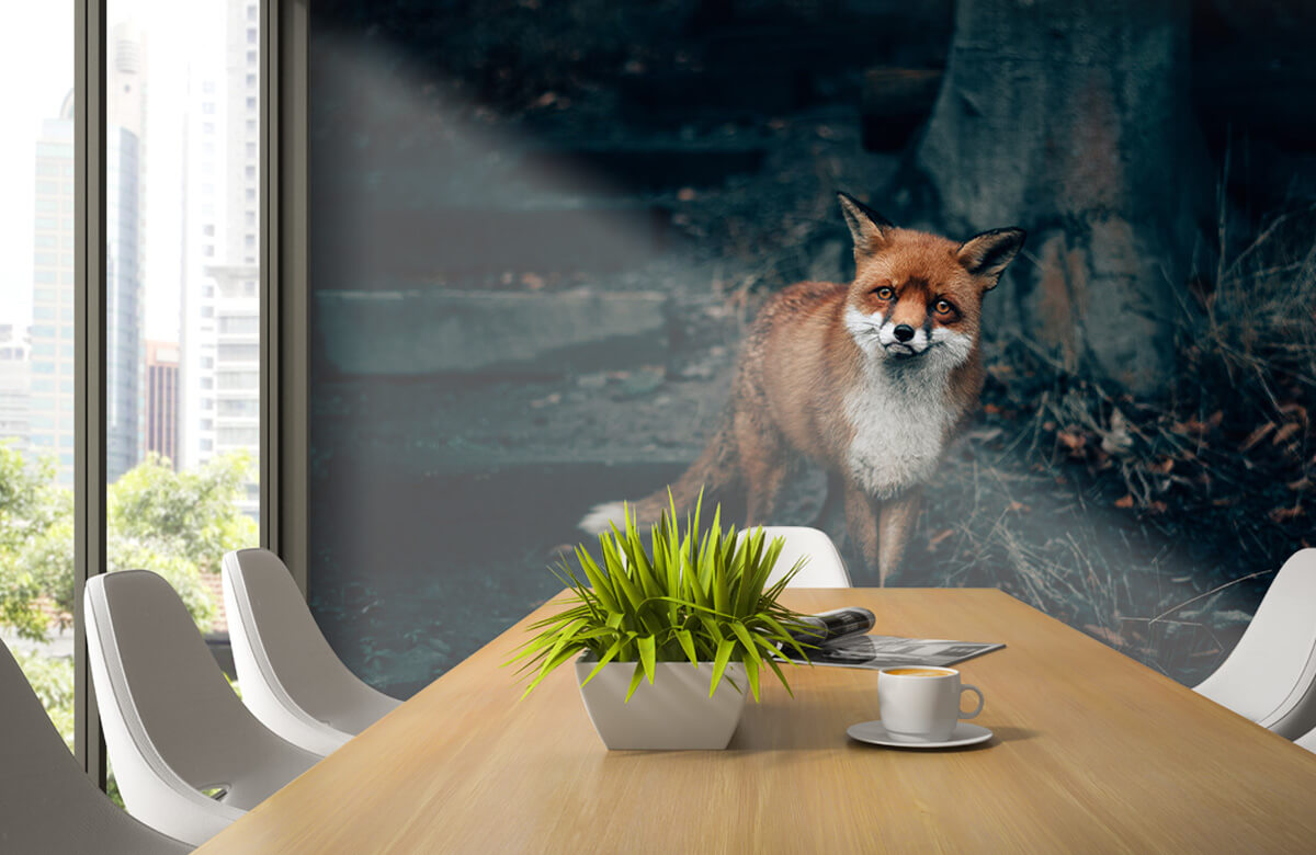 Wallpaper Un renard curieux 6