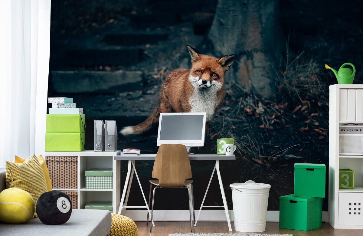 Wallpaper Un renard curieux 1