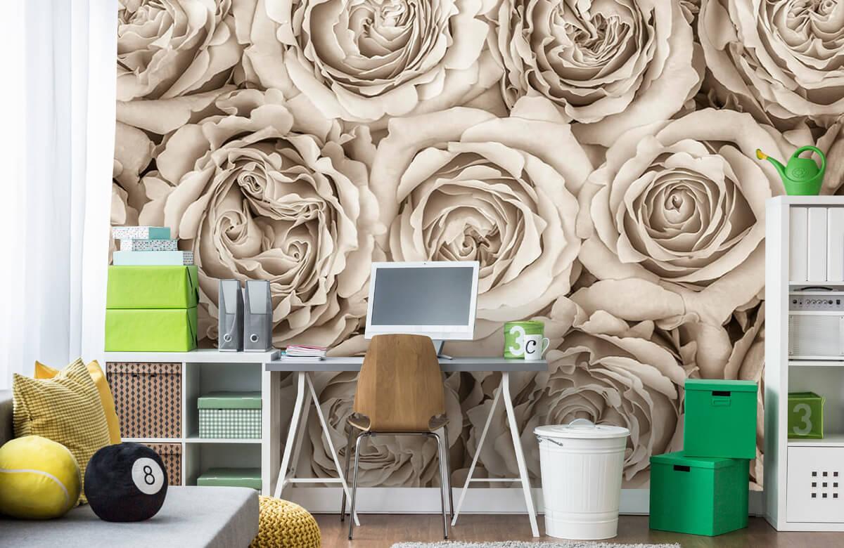 Fond d'écran de roses 10